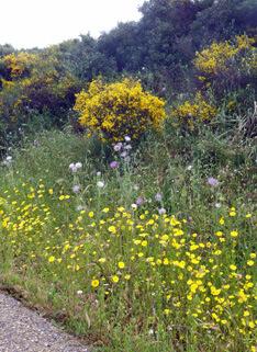 prachtige bermen met bloeiende bloemen tijdens reisverslag sardinië mei Sardinië mei